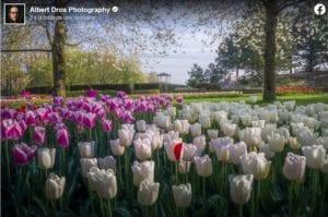 fleurs 300x199 - Aux Pays-Bas : quinze photos du Keukenhof désert